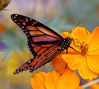 children are like monarch butterfies